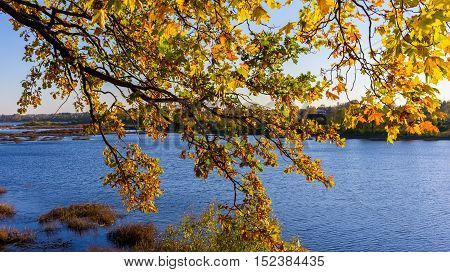 branch of a tree with yellow autumn leaves against the backdrop of the lake