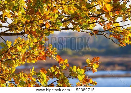 beautiful red, yellow and brown oak leaves on branch of a tree, an oak branch in the background and views of the river landscape, trees, earth, dry grass, autumn, october, foliage of different colors