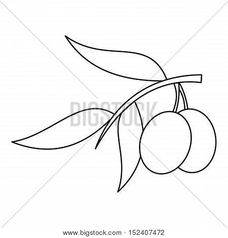 Olive branch with olives icon. Outline illustration of olive branch vector icon for web