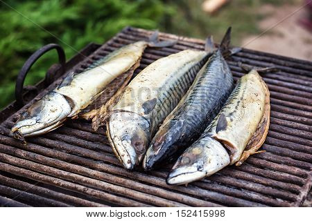 Mackerel fish on grill and hot coals, DOF. Scomber blue mackerel roast, Japanese mackerel roasted, Pacific mackerel, slimy mackerel, spotted chub mackerel, Scomber australasicus smoked food