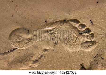 footprint in the sand outdoors on a Sunny day