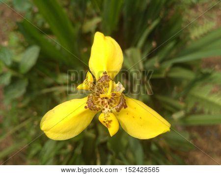 Flower in Indonesian forest. Cilember bogor jawa barat