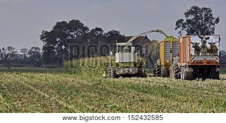 The final stretch of the maize harvest. A chopper, a loaded and an empty silage wagen.