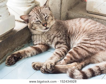 Portrait of grey cat sleeping on ground.