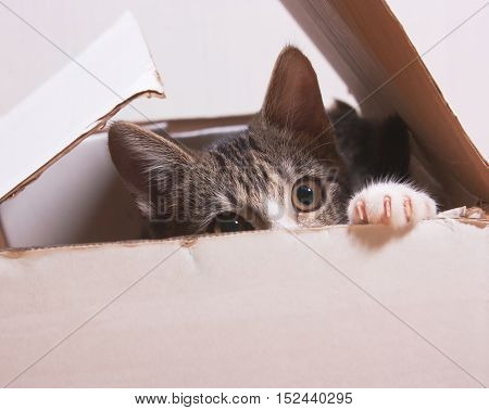 The cat is sitting in a box. Kitten hiding in box