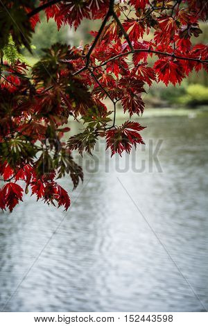 Autumn leaves framing background of lake water