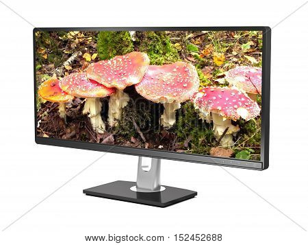 4K TV and red amanitas on screen on white background (3d illustration).