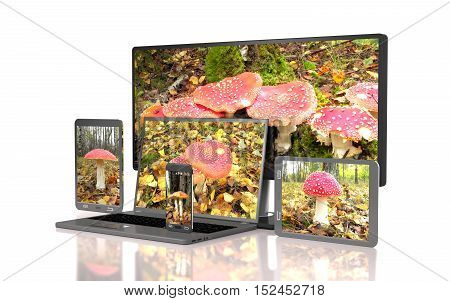 Set of amanitas on the screen of computer gadgets on white background (3d illustration).