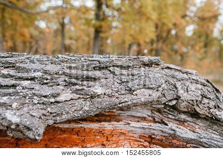 Old rough wood texture. Wooden texture. Wooden background. Tree texture. Tree background. Crack tree texture. Old tree texture. Old tree background. Exotic tree texture. Nature texture background.