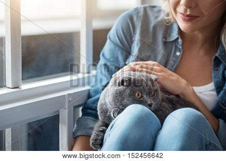 Close-up of young blond lady patting her grey cat near window.