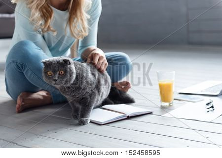 What is there. Close up of blond-haired woman sitting on wooden floor and patting her British cat.