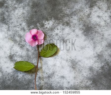 Violet flower on dark background - condolence card
