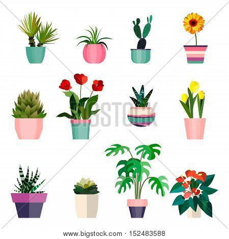 Set of green house plants in pots. Leaf and flowers. Flowerpot isolated objects, houseplant collection. Vector illustration eps10
