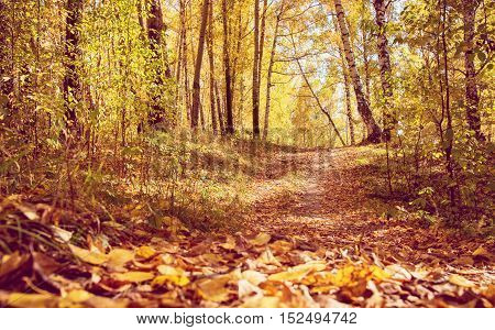 Pathway through Golden Fall Forest in Park As Autumn Landscape