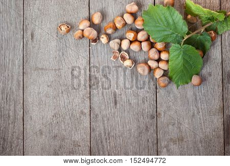 heap of fresh hazelnut in nutshel and few cracked
