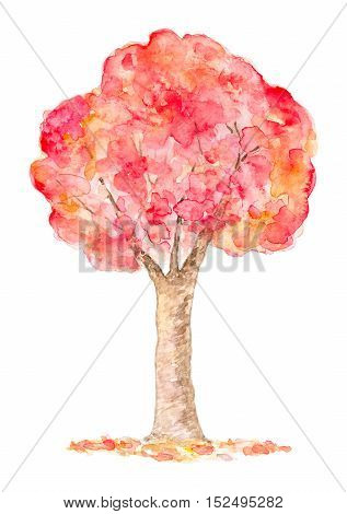 Watercolor Autumn Tree Hand Drawn and Painted Isolated on White