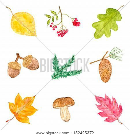 Watercolor Collection of Autumn Elements Isolated on White