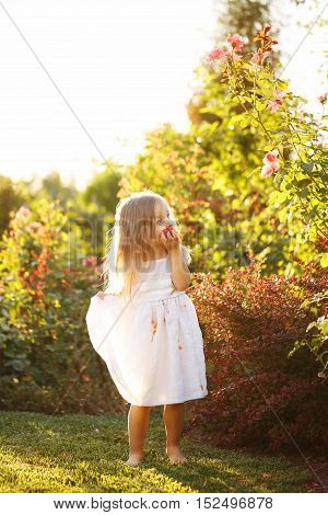 Cute little girl eating a tomato. She stands barefoot on the green lawn. Girl soiled white dress in tomato juice.