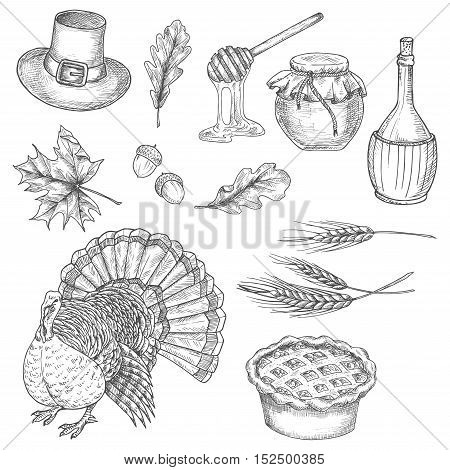 Thanksgiving traditional food abundance symbols of turkey bird, sweet pie, wheat ears, honey sticks, vine, pilgrim hat, acorns, oak and maple leaves. Vector doodle sketch icons for greeting cards, invitation