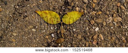 Yellow leaf on the asphalt, autumn, colors of autumn, fall, autumn pattern, autumn background, yellow leaves, autumn texture, fall back, autumn back, hello autumn grunge autumn background