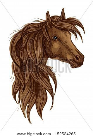 Arabian horse head sketch. Brown stallion horse of arabian breed. Horse racing sign, equestrian sporting competition theme design
