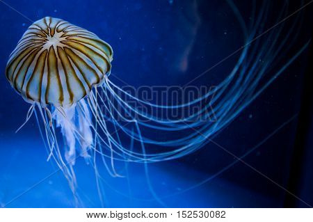 some jellyfish with the ocean in background