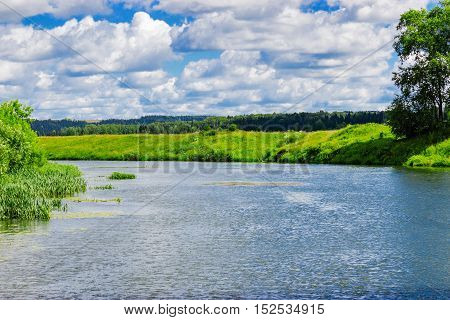 River and forest on the coast in summer day