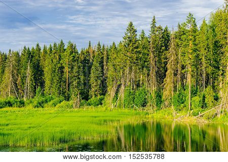 Marshland forest and swamp in the summer. no people