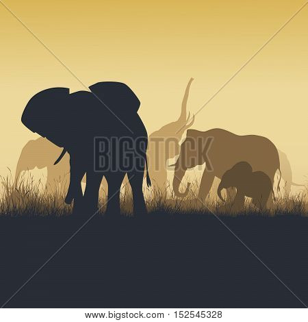 Square vector illustration family of elephants in African sunset savanna.