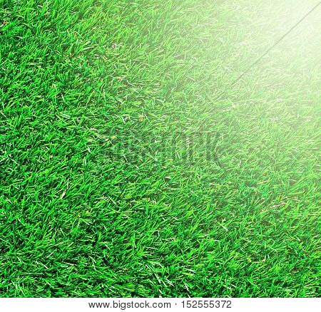 Green background of football field grass texture with sunny vivid yellow rays of first spring sun in shiny day outdoor