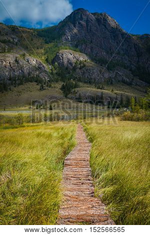 Wooden path through the peat bog. Altai