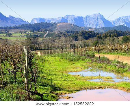 Grape Farm, Stellenbosch, Western Cape South Africa 11cds