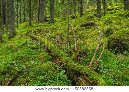 Natural green forest landscape in southern Finland