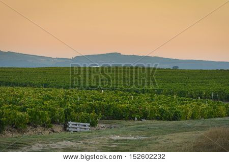 Landscape Of Beaujolais Land With First Lights Of The Day, France
