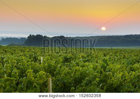 Sun Is Rising Over Vineyards Of Beaujolais Land, France