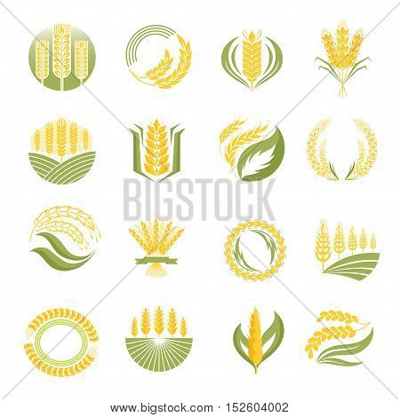 Cereal ears and grains set for agriculture industry or logo design. Vector food illustration organic natural wheat logo icon. Healthy bread wheat logo icon organic natural agriculture label.