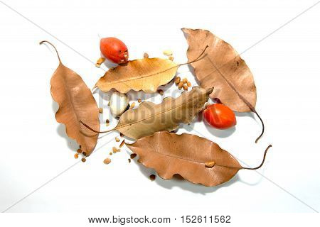 Dry Leaf, Red Ruff And Stones On White Background