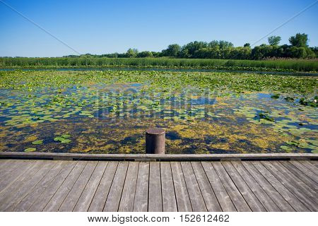 Wooden deck and marsh area in Point Pelee National Park, Ontario, Canada