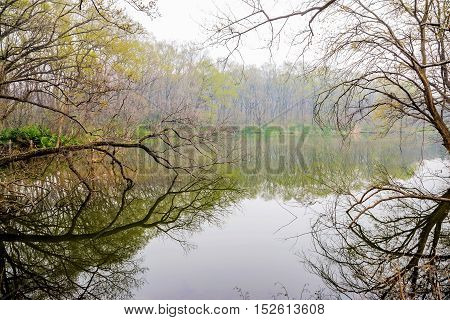 Enchanting lake with dead trees in Nanjing