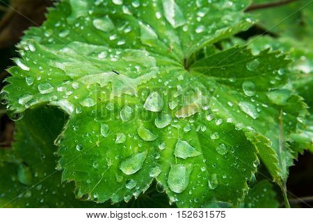 Water Droplet Bright Green Leaf Macro Shrub Ground Plant Organic Bush Weeds Lake Shore Raindrops Det