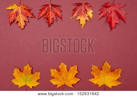 Autumn colorful fallen maple leaves in rows on claret background with copy space