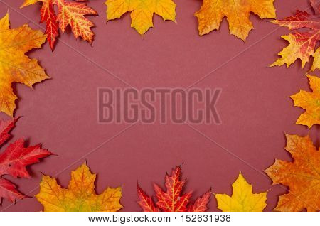Claret background surrounded by colorful autumn fallen maple leaves with copy space