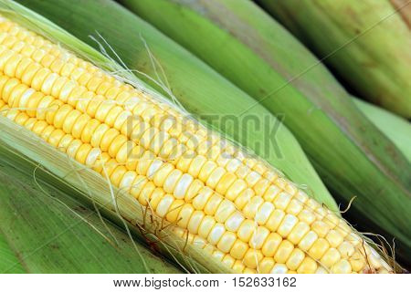 close up group sweet corn husks background
