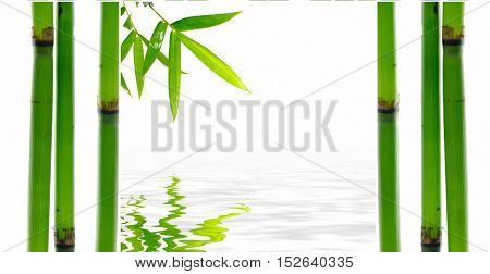 Still life with young bamboo sticks with leaf and stones