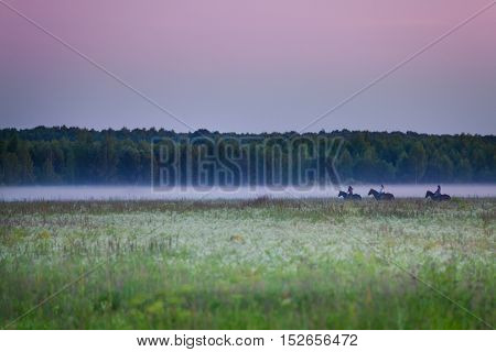 Beautiful view of three equestrians riding in foggy field at sunset