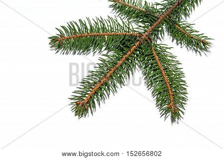 evergreen tree branch isolated on white background