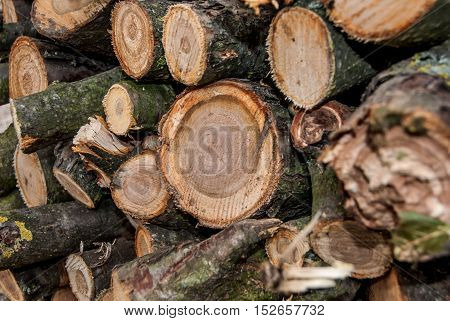 background of  a firewood stack for winter
