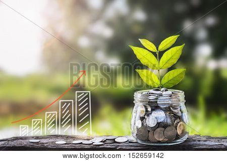 growing Money and plant Saving money concept graph