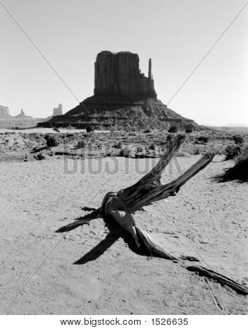 Mittens In The Desert