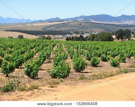 Grape Farm, Western Cape, South Africa 11vvd